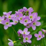 Natural Herbs and Its Best Known Skincare Property